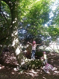 Out and about - with the Snake Tree