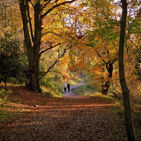 Colours of Autumn | Ashridge Park, Hertfordshire, UK | Autumn vi